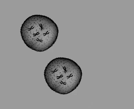microbio: Dos microbio blanco y negro se ve en un microscopio en un consultorio m�dico