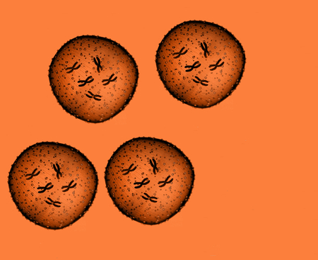microbio: Cuatro Microbio Naranja visto en un microscopio en un consultorio médico