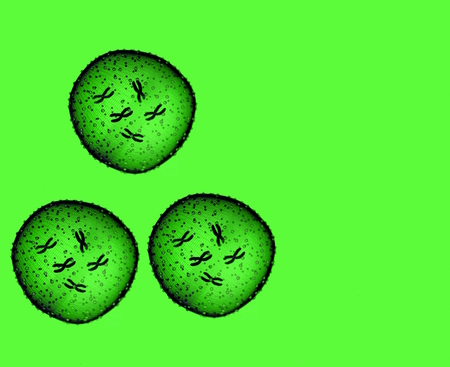 microcosmic: Three green microbe seen in a microscope in a medical office Stock Photo