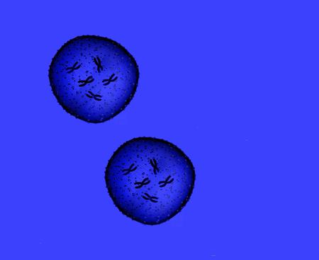 microbio: Dos Microbio azul visto en un microscopio en un consultorio m�dico