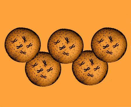 microcosmic: Olympians orange microbes Stock Photo