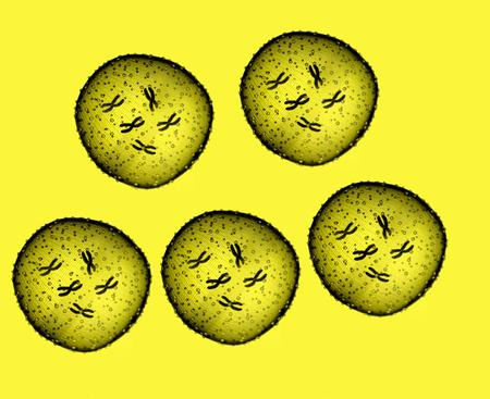 microbio: Cinco microbio amarilla se ve en un microscopio en un consultorio m�dico