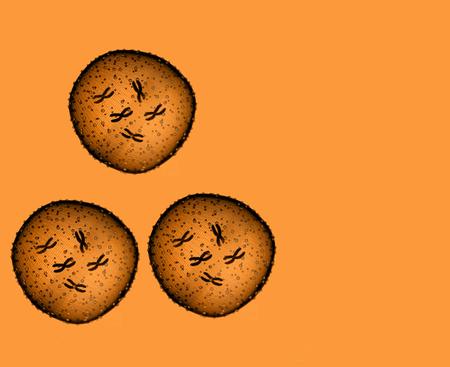 microbio: Tres de naranja microbio visto en un microscopio en un consultorio m�dico