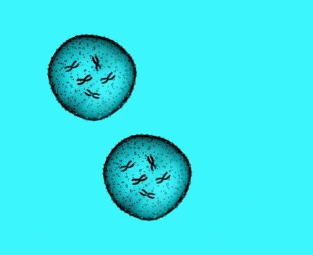 microbio: Dos microbio de color azul claro se ve en un microscopio en un consultorio médico