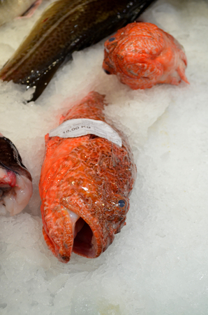 sow: Scorpaena Sow Scorpion fish prepaired for cooking fish Rose Sebastes marinus at the market Stock Photo