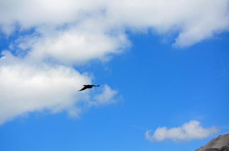曇り空で天地間飛ぶカラス
