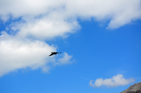 Flying Crow between heaven and earth in a cloudy sky