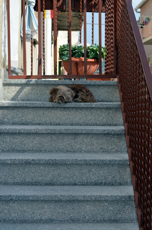 Dog sitting at staircase to defend His home