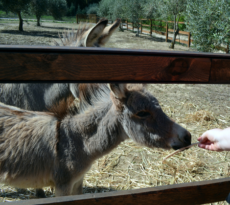 Donkey behind a wooden fence in Sardinia Italy Imagens