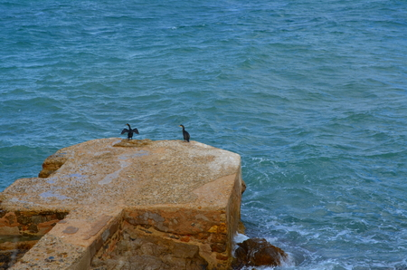 Two black birds relaxing on rock in the sea