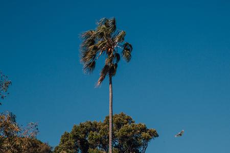 Parrot flying in Sydney near the Botanic park 写真素材 - 114399931