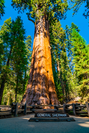 General Sherman - the largest tree in the world by volume, located in the Sequoia National forest.