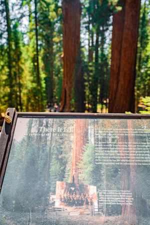 Sequoia National Park, USA. July 10, 2018. Information sign in the Sequoia National Forest with one of the largest trees in the world.