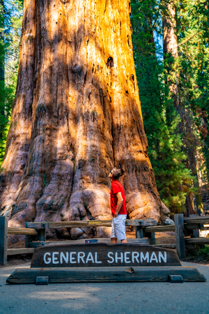 Young man standing by the huge sequoia tree in the Sequoia National Park. Tiny human comparing to an enormous tree. Reklamní fotografie