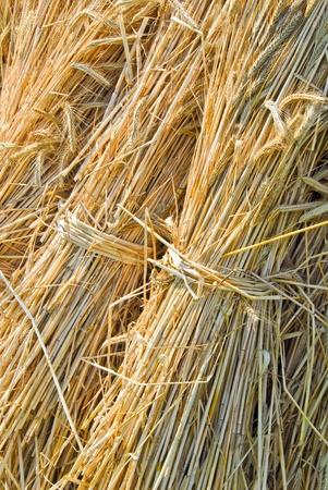 Kautionen von Stroh, Secale cereale Lizenzfreie Bilder