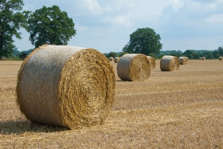 stubble field: Stubble field with bales of straw