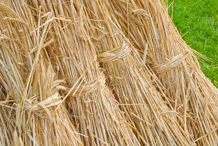Bales of straw, Secale cereale Stock Photo - 10019133