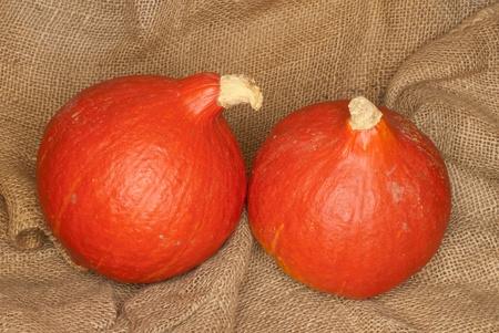 Zwei Hokkaido-Kürbisse, Cucurbita maxima Standard-Bild