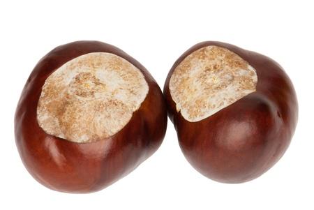 Zwei glänzend Conkers von einer Rosskastanie, Aesculus Hippocastanum, isoliert, Weißer Hintergrund
