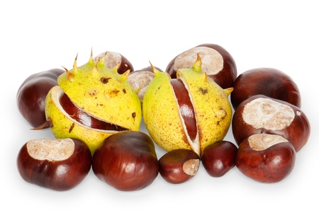 aesculus hippocastanum: Glossy conkers with capsules of a Horse Chestnut, Aesculus hippocastanum, isolated against white background