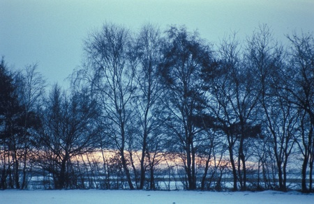 abatement: Row of trees with nightly sky in winter Stock Photo
