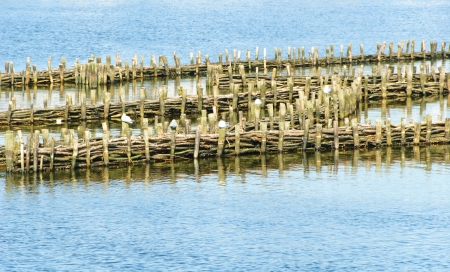 weir: Historical herring weir in the Schlei at Kappeln Stock Photo