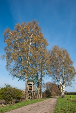 Box stand at a birch in spring photo