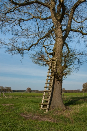 deer hunting: Box stand at a tree in spring