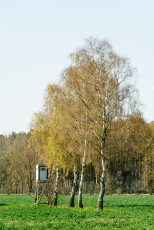 Box stand at a row of birches in spring Stock Photo