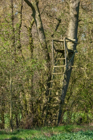 Ladder stand at a tree on the edge of the forest photo