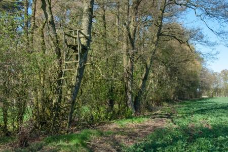 Ladder Stand auf einem Baum am Rande des Waldes
