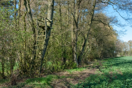 Leiter stehen an einem Baum am Waldrand Standard-Bild - 18997015