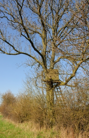 Box stand in a tree at an acre photo