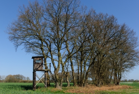 Box stand at the end of a row of trees in a field photo