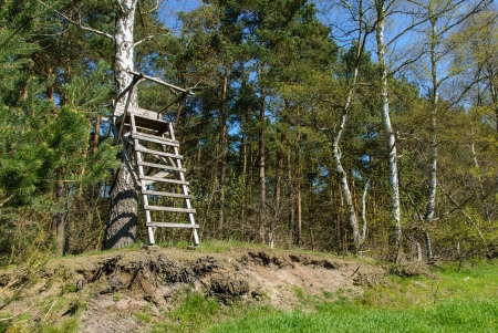 Ladder stand at a birch in spring photo