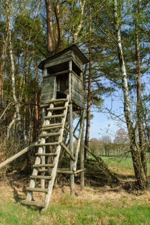Box stand at the edge of a forest in spring photo
