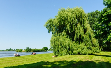 salix alba: People at the riverside under weeping willows in summer Stock Photo