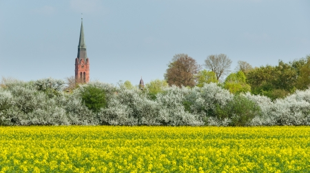 Tower of St  Martin and town hall tower in Nienburg on the river Weser Standard-Bild - 20833669