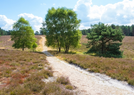 scots: Hiking trail in the heathland of the Lueneburg Heath Stock Photo