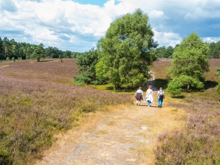 heathland: Hiking in the heathland of the Lueneburg Heath Stock Photo