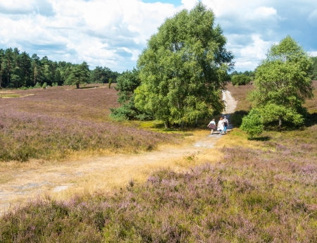 scots: Hiking in the heathland of the Lueneburg Heath Stock Photo