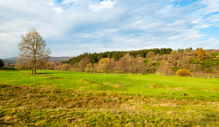 mounds: Meadow with mounds at the nature reserve Valley of Gel?ngebach in Medebach, Sauerland, Germany