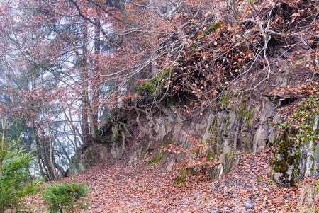 Bäume und Baumwurzeln an einem gebrochenen Rand des Geländes im Steinbruch bei Bromberg, Medebach, Hochsauerland Lizenzfreie Bilder