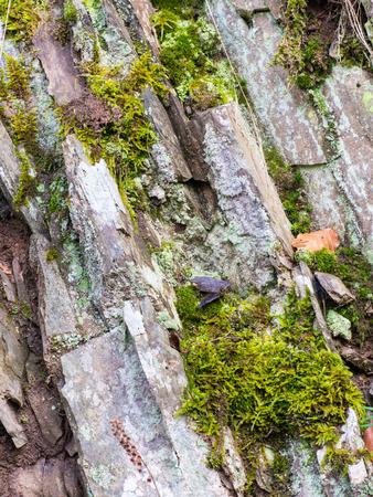 Felsen mit Moos und Flechten auf Philosophen Wanderweg an der Kahlen in Medebach, Sauerland