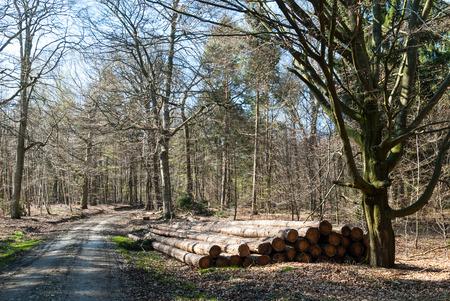 Stapel von Baumstämmen in einem Buche im Wald