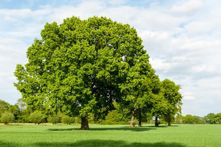 Reihe der Bäume in den Sümpfen im Frühjahr