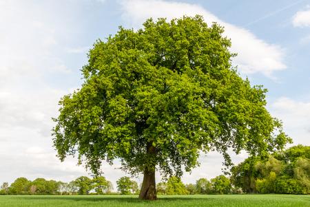 Baum in den Sümpfen im Frühjahr Standard-Bild