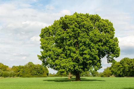 Baum in den Sümpfen im Frühjahr Lizenzfreie Bilder