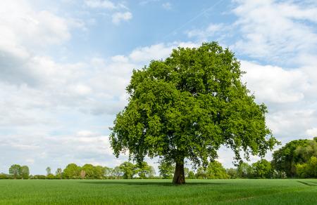 Baum im Sümpfe im Frühjahr