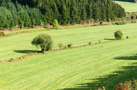 Blick auf ein Tal am Berg Bromberg in Medebach, Sauerland, Deutschland